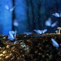Image de profil de Eva Orfanos